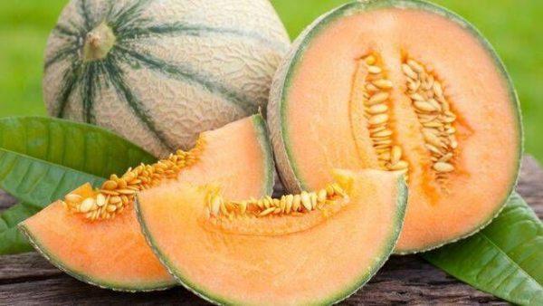 Cantaloupes15