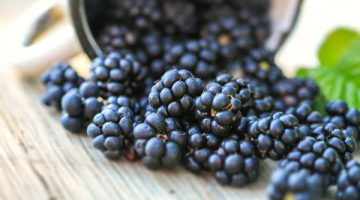 Blackberries Are A Key To Fighting Cancer, According To Studies