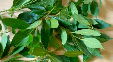 Eating Bay Leaves Could Put Heart Disease In Check