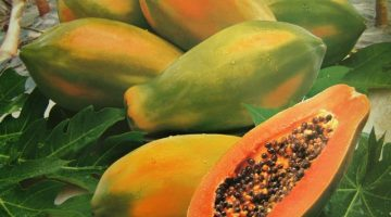 11 Amazing Health Benefits About Papaya That You May Want To Know