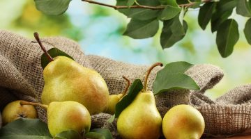 Pears Are Impressive In Helping Infants With Constipation