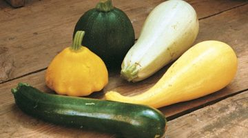 Eating Squash Regularly Could Possibly Do Wonders For Diabetes