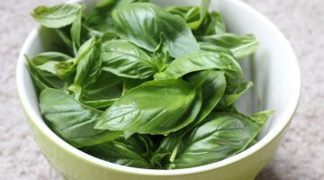 Consuming Basil Could Do Wonders In The Fight Against Tuberculosis, According To Researchers