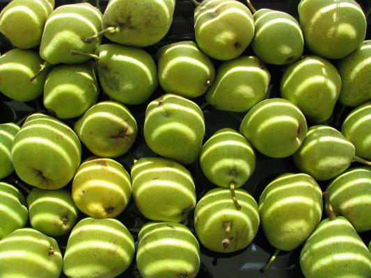 pears4