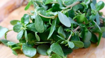 9 Breathtaking Health Benefits Of Purslane That Prove It Should Be Talked About More