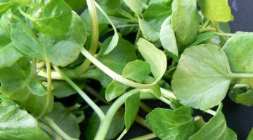 What Happens To Breast Cancer After Consuming Watercress Is Very Alarming