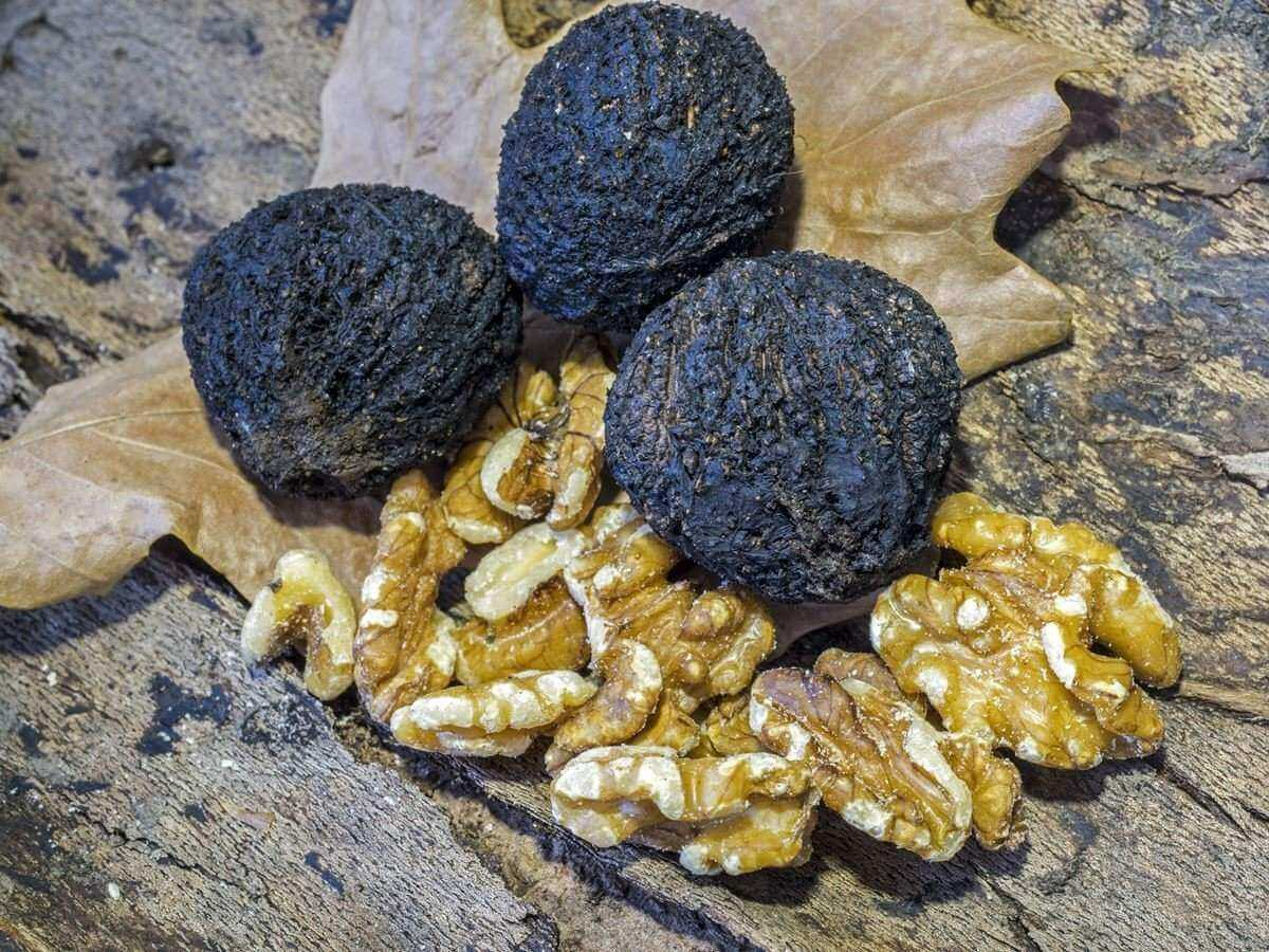 Black Walnut Natural Hair Dye