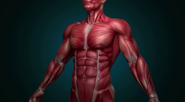 9 Alkaline Foods That Will Help You Build And Support The Muscular System